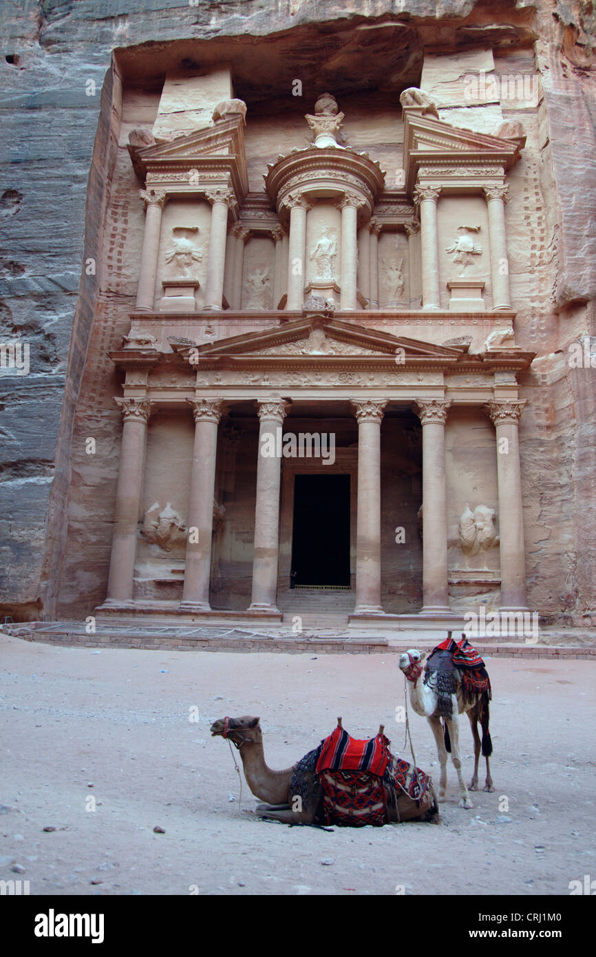 Bactrian camel, two-humped camel (Camelus bactrianus), two camels in front of the rock cut tomb called 'treasury' - Stock Image