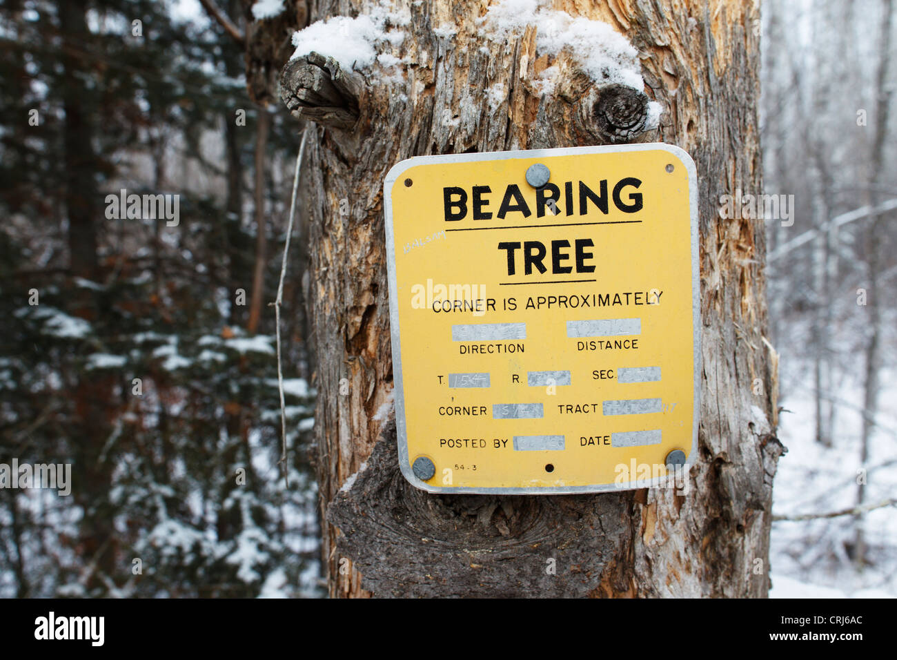 Bearing Tree Stock Photos Bearing Tree Stock Images Alamy