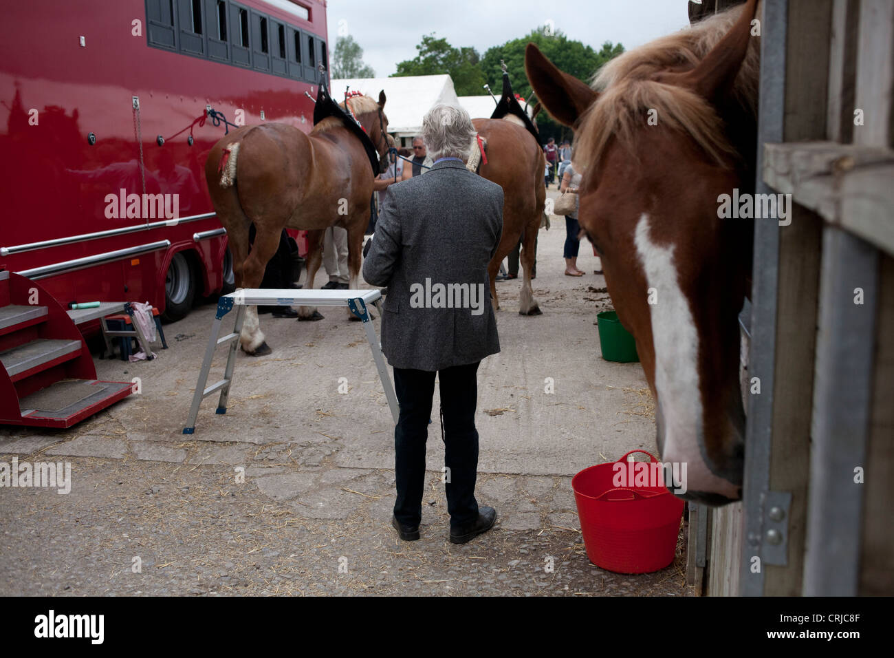 Shire horses are prepared for show at the Bath and West Agricultural show in Shepton Mallet - Stock Image