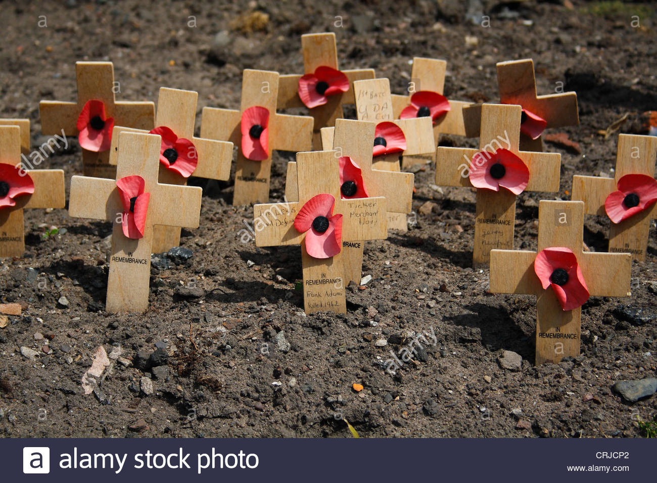 Remembrance day, Crosses with poppies, at St. Nicholas Church, Liverpool, Merseyside, England, seaman´s church. - Stock Image