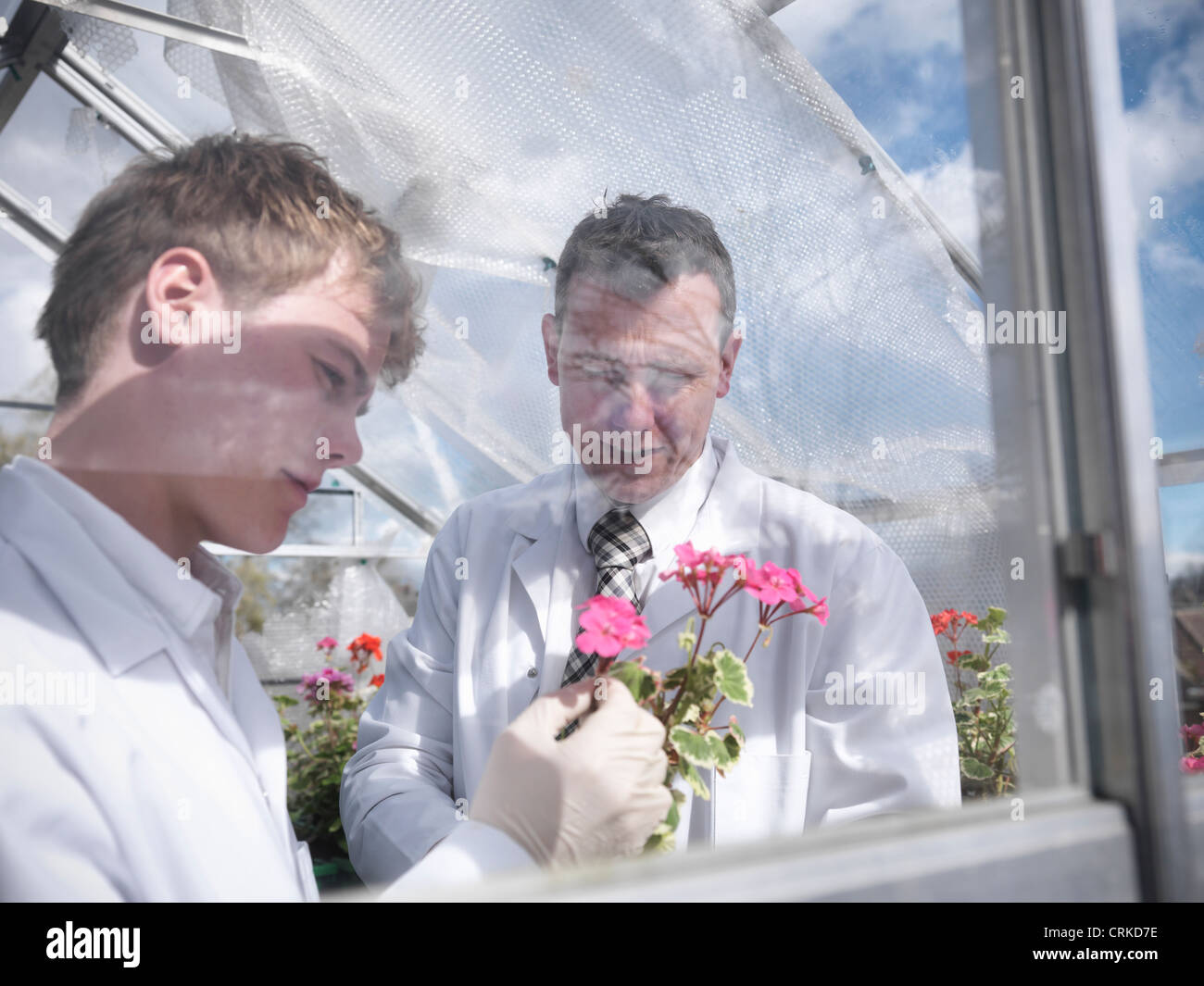 Teacher and student in greenhouse - Stock Image