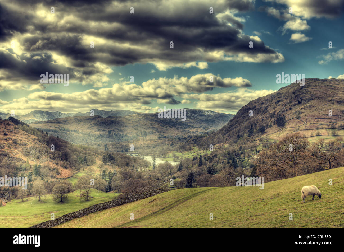 View of lake winderemre from high in moutains with wall and sheep - Stock Image