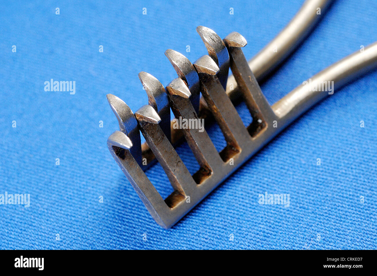 The toothed ends of Traver's forceps. - Stock Image