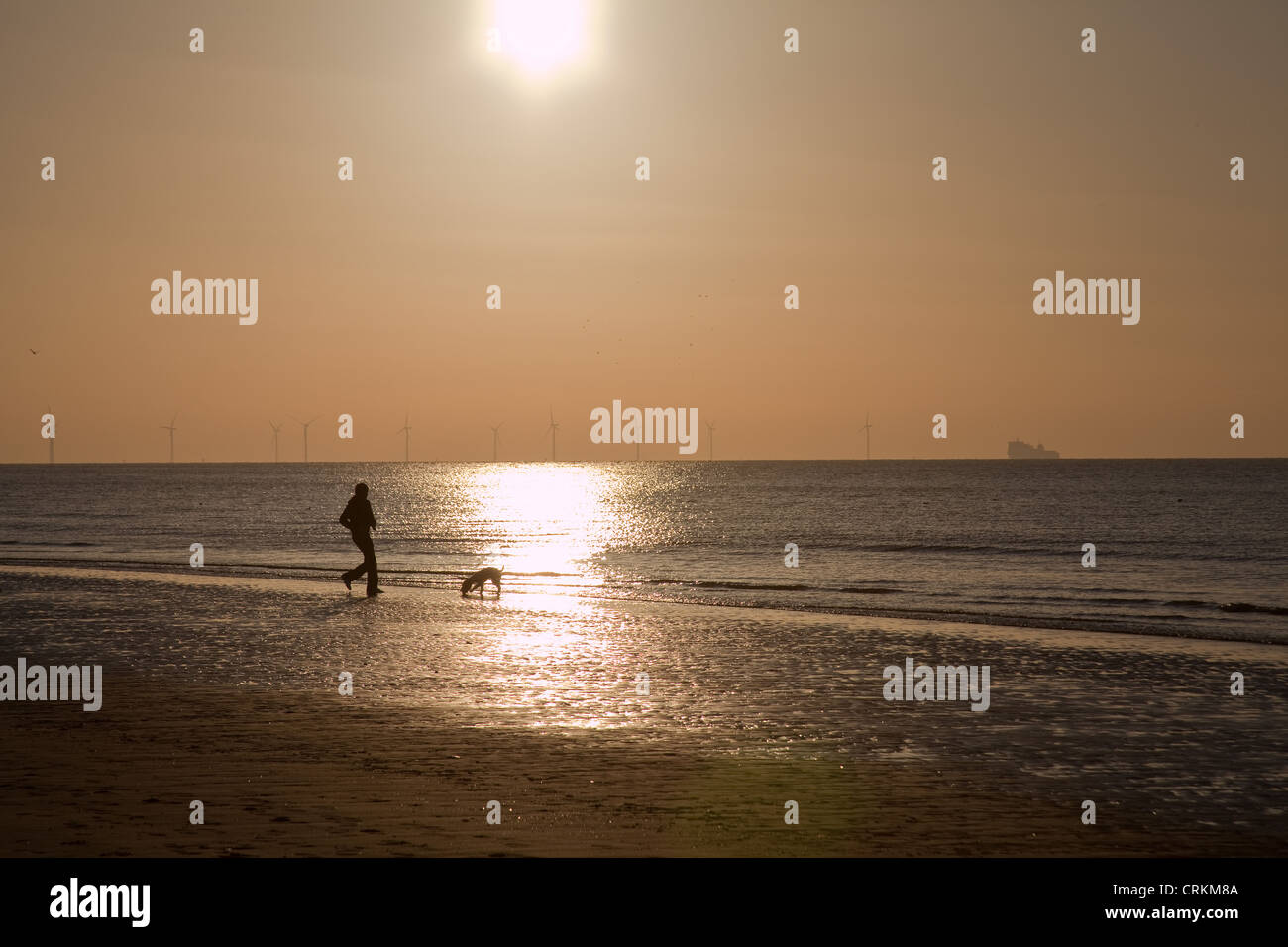 The beach at Formby merseyside,northwest England.,13/ Jan/2012.A  man retrieves his dog from the sea.    This is - Stock Image