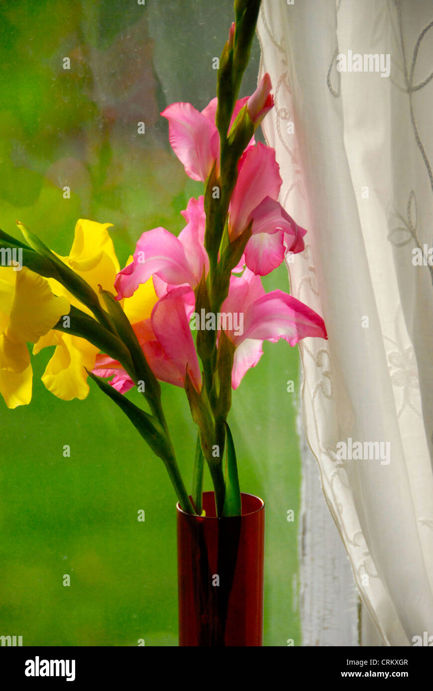 Beautiful cut flowers on the windowsill for Mother's Day and a lace curtain looking out on the yard, Vermont - Stock Image