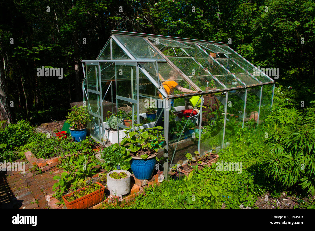 Greenhouse at a private garden plot field Porvoo Uusimaa province Finland northern Europe - Stock Image