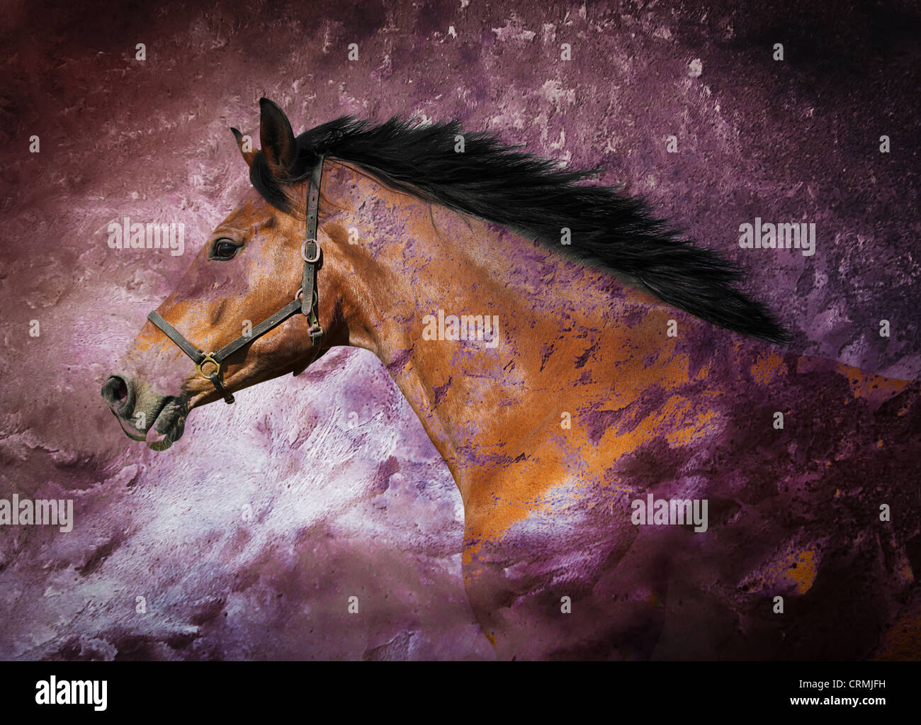 Portrait of a bay horse over purple texture - Stock Image