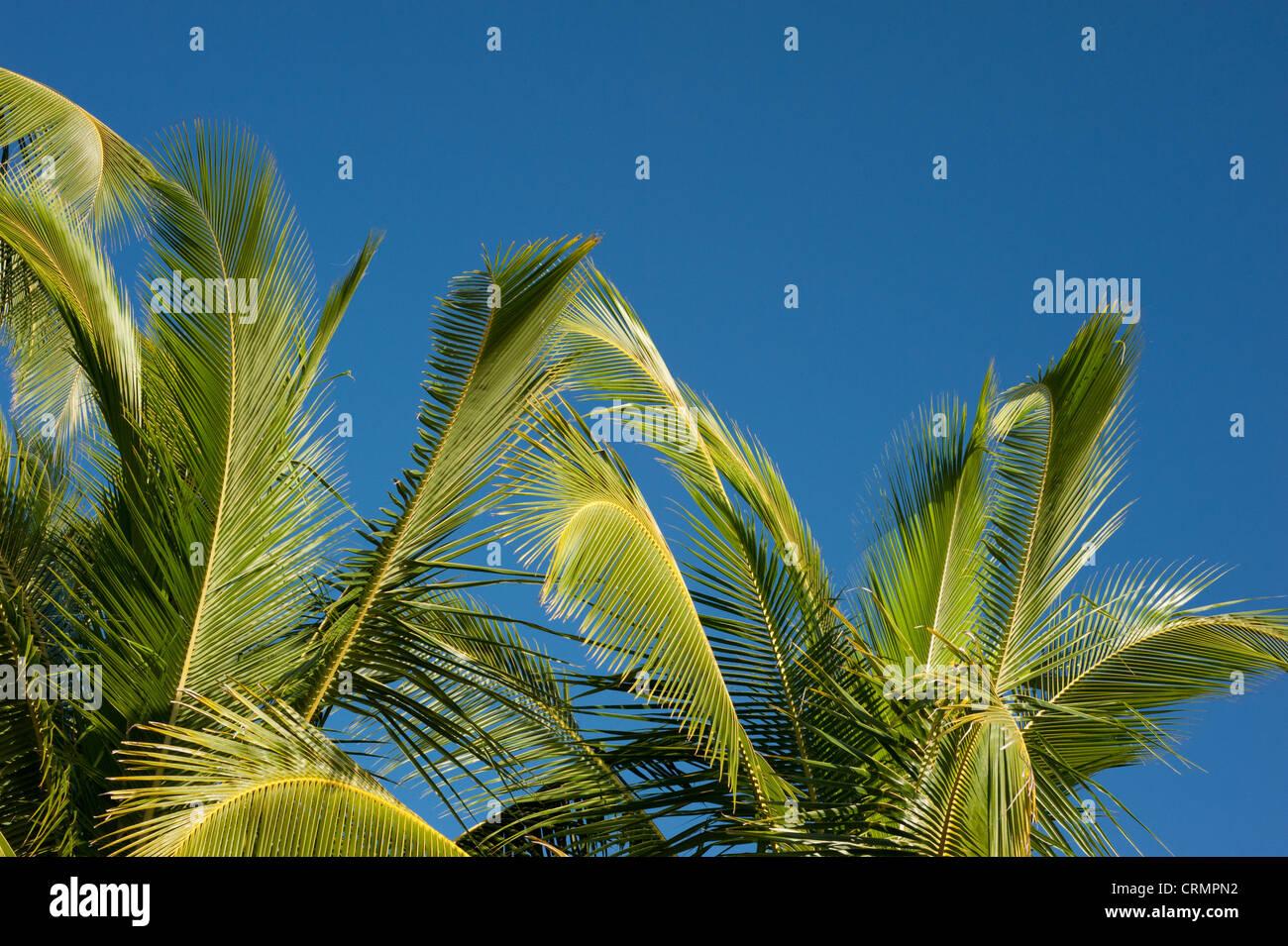 Beach Palm Trees Costa Rica Stock Photos & Beach Palm Trees Costa ...