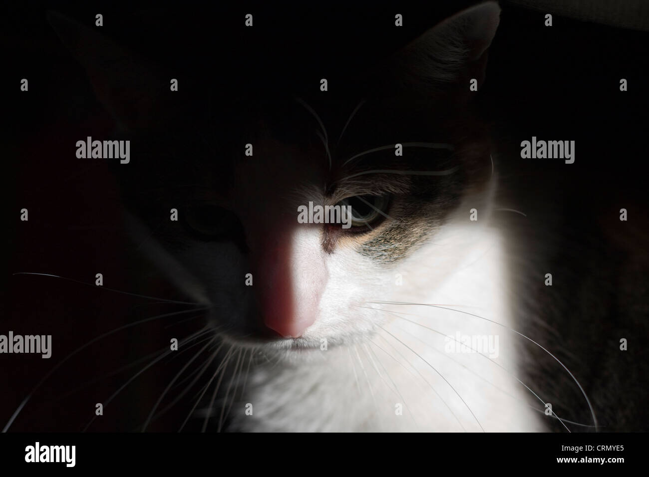 Cat emerging from the shadows - Stock Image