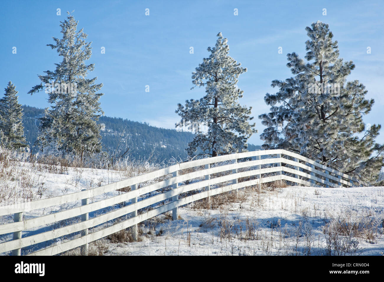 White fence in a field with frosty trees, Vernon, British Columbia, Canada. - Stock Image