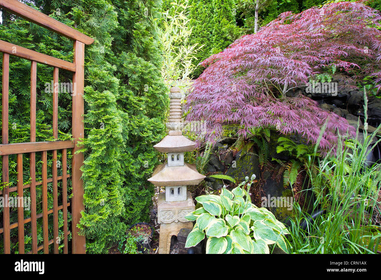 Japanese Inspired Garden With Stone Pagoda Trellis And Maple Tree   Stock  Image