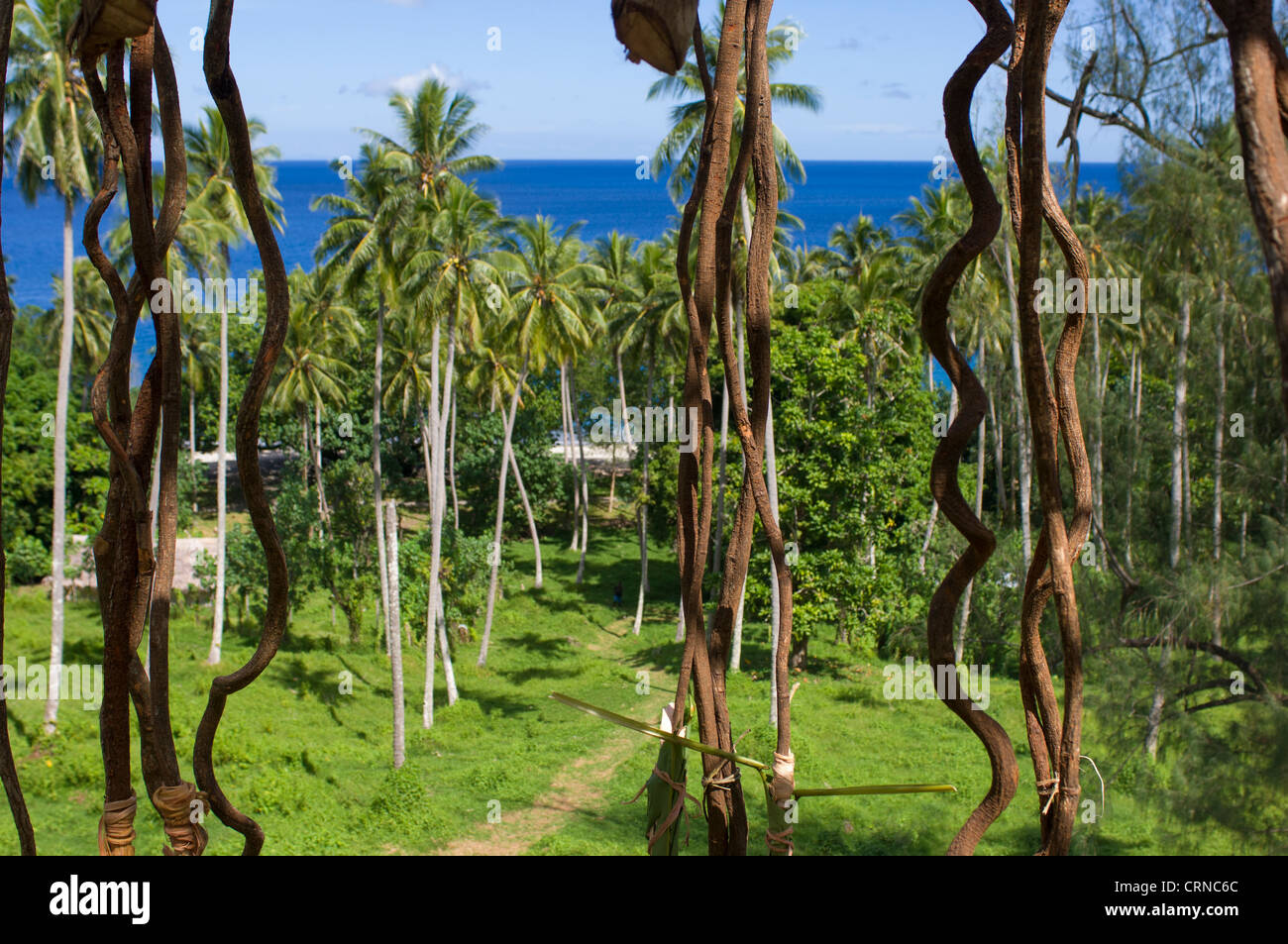 Vines hanging ready for the jumpers,  before the Nagol land-diving ceremony, Pentecost Island, Vanuatu - Stock Image