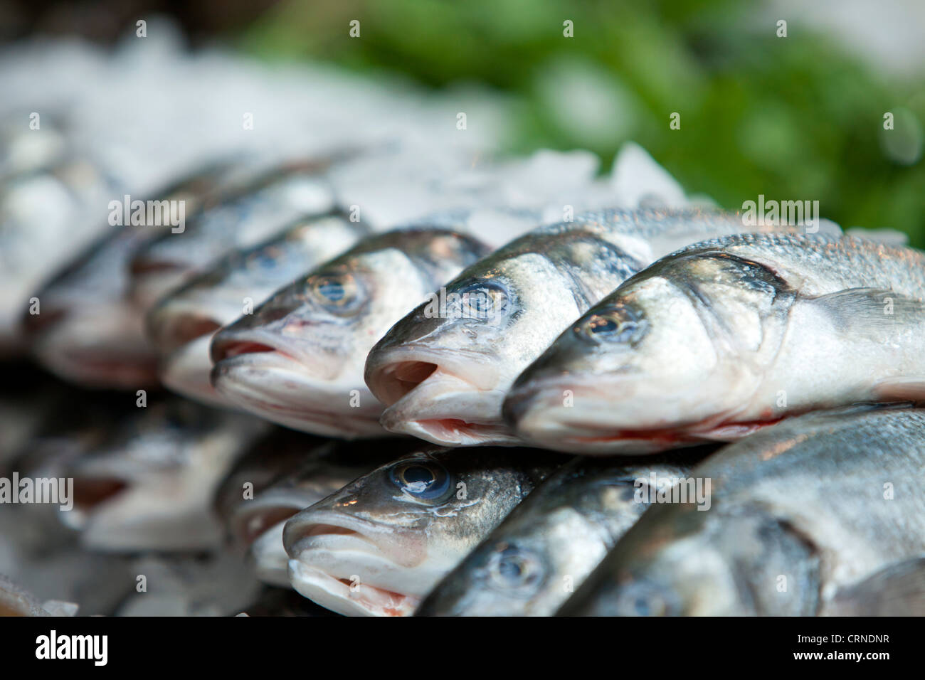 Fresh fish for sale in Borough Market. - Stock Image