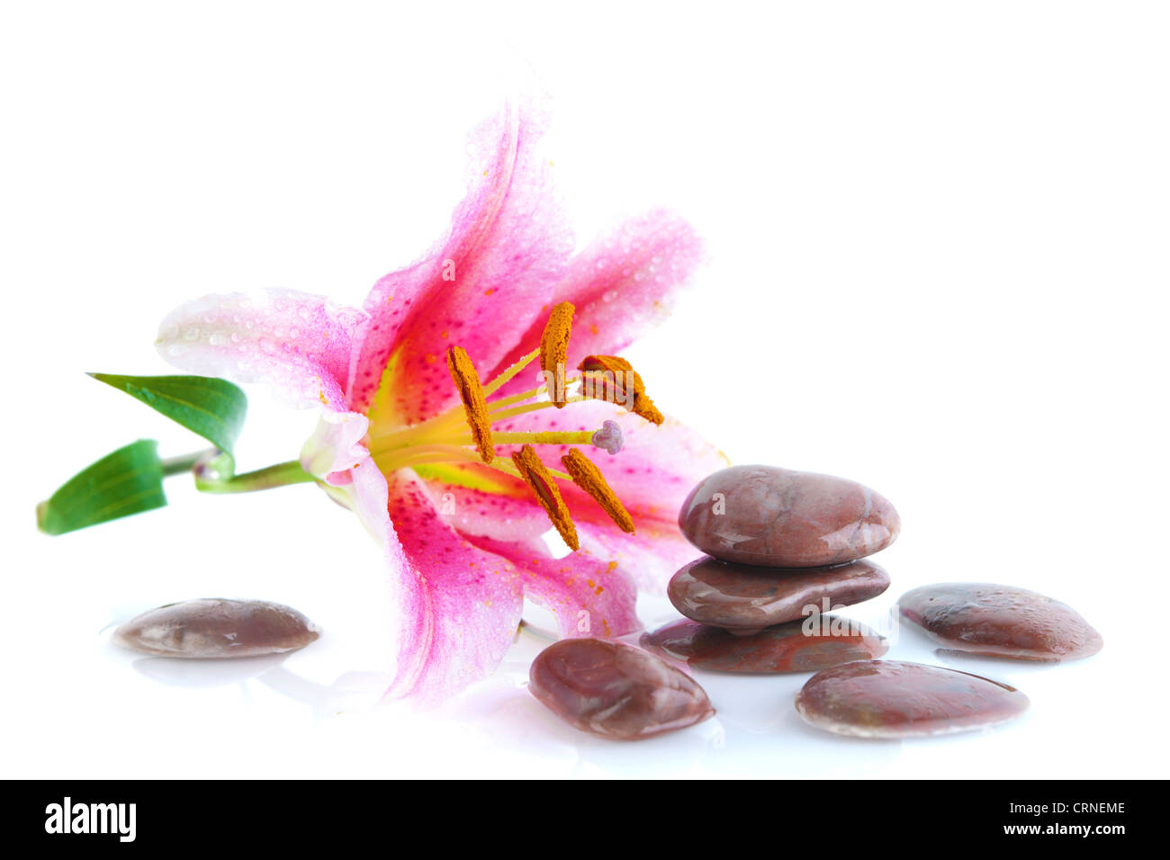 Pink lily and stones, with water reflection Stock Photo