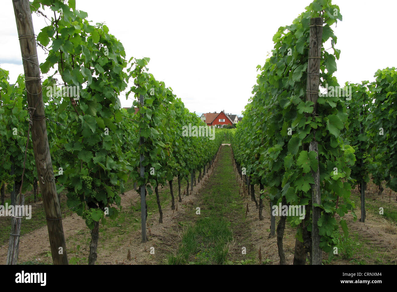 Wine ranks in northern France - Stock Image