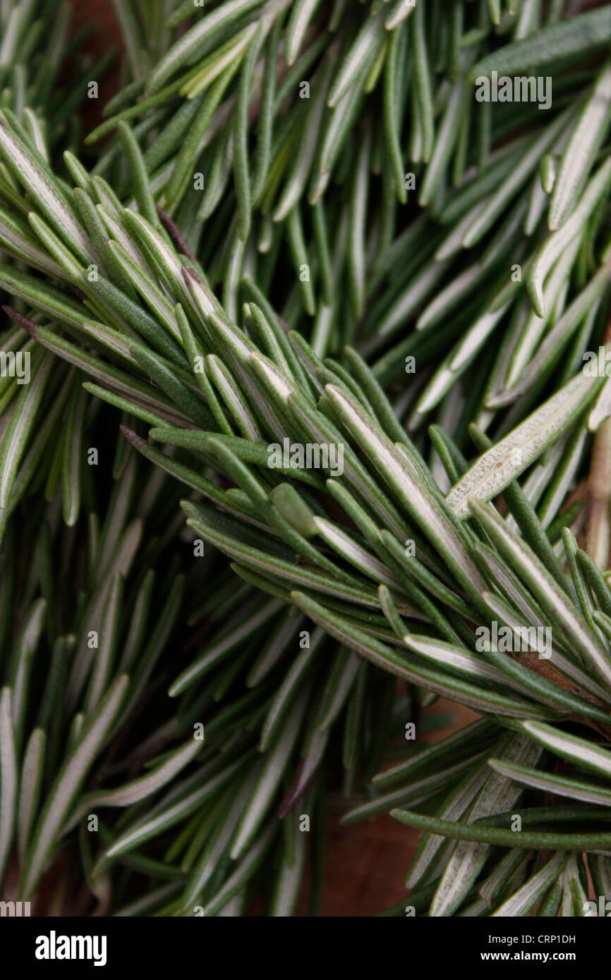 Fragrant rosemary herbs isolated on white - Stock Image