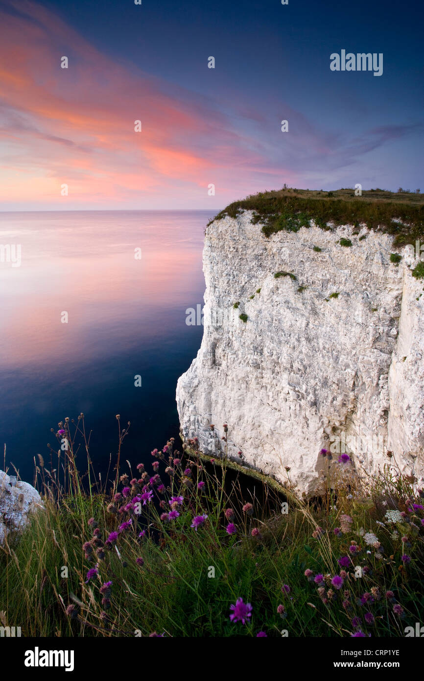 Sunrise over the white chalk cliffs at Handfast Point near Swanage. - Stock Image