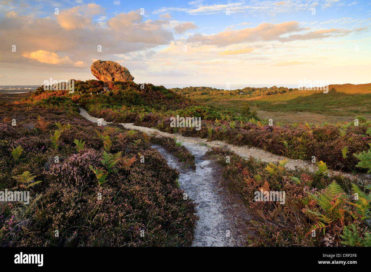 Evening light at Agglestone Rock, a large sandstone rock on Studland Heath. - Stock Image
