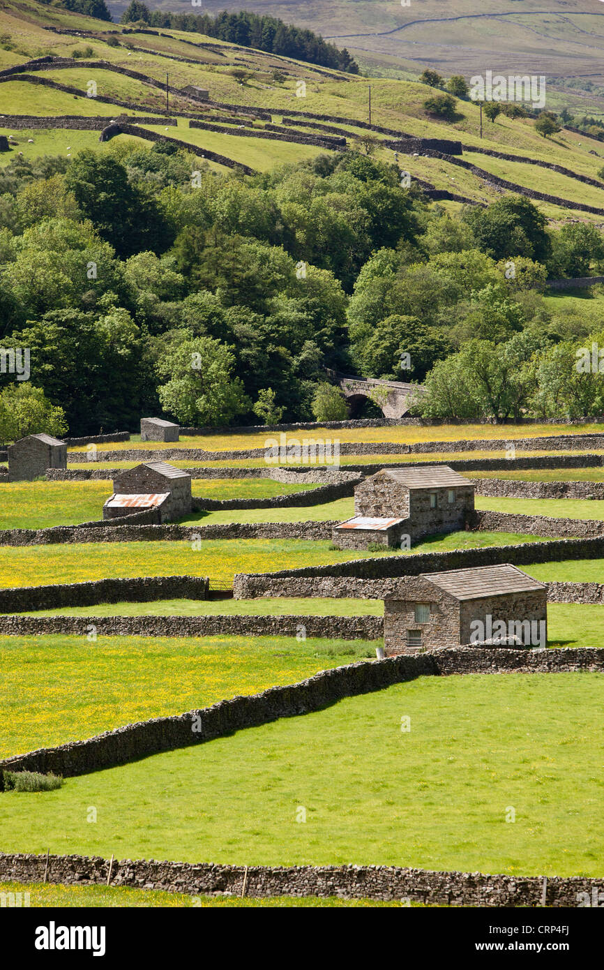 Stone Barns at Gunnerside Bottoms in Swaledale in the Yorkshire Dales National Park. - Stock Image
