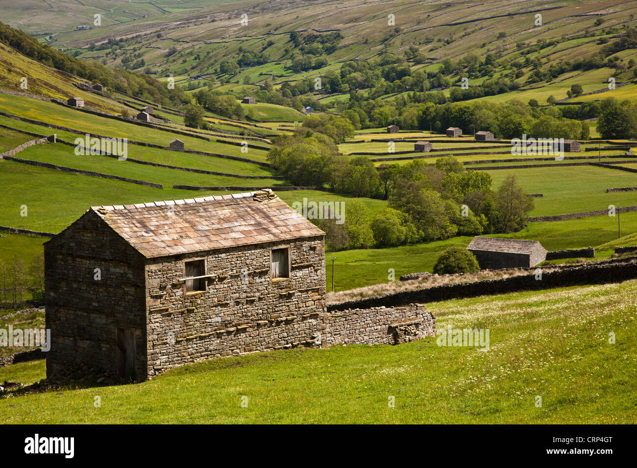 Stone barns near Thwaite in Upper Swaledale in the Yorkshire Dales National Park. - Stock Image