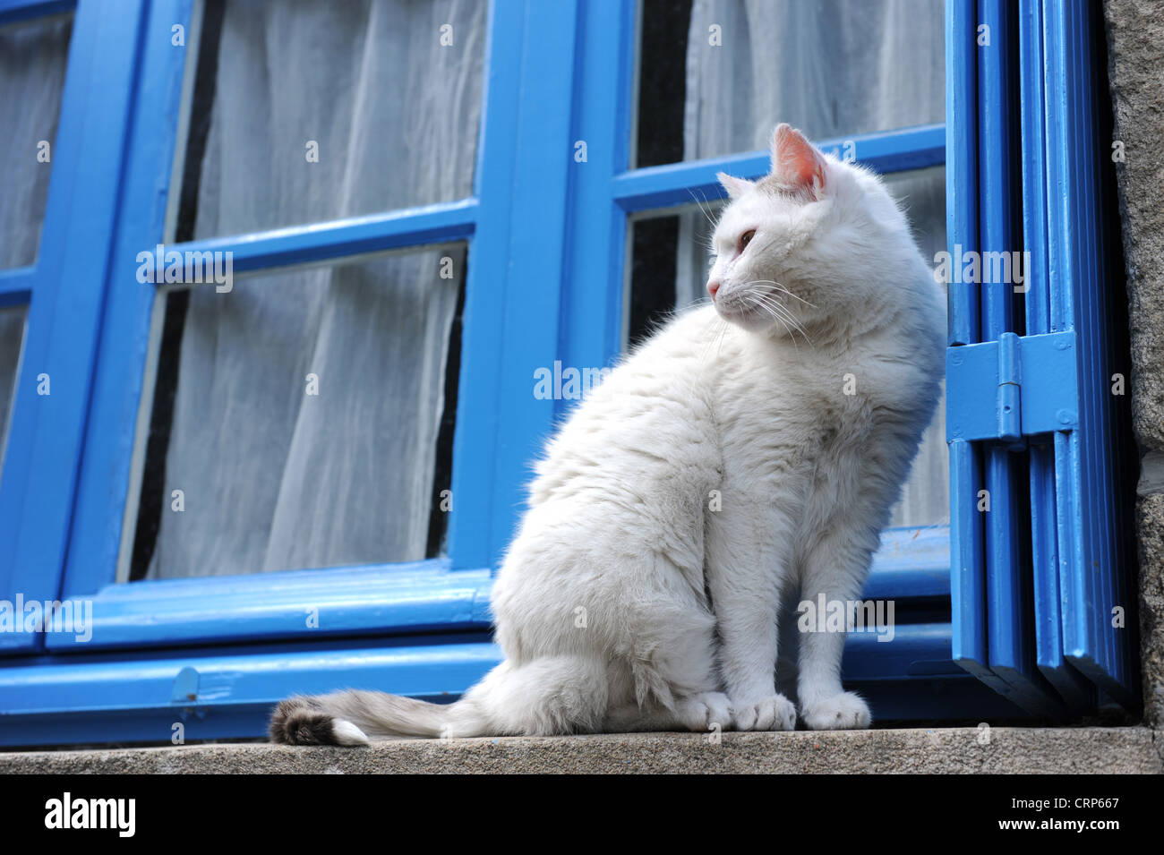 White cat on window ledge in French village - Stock Image