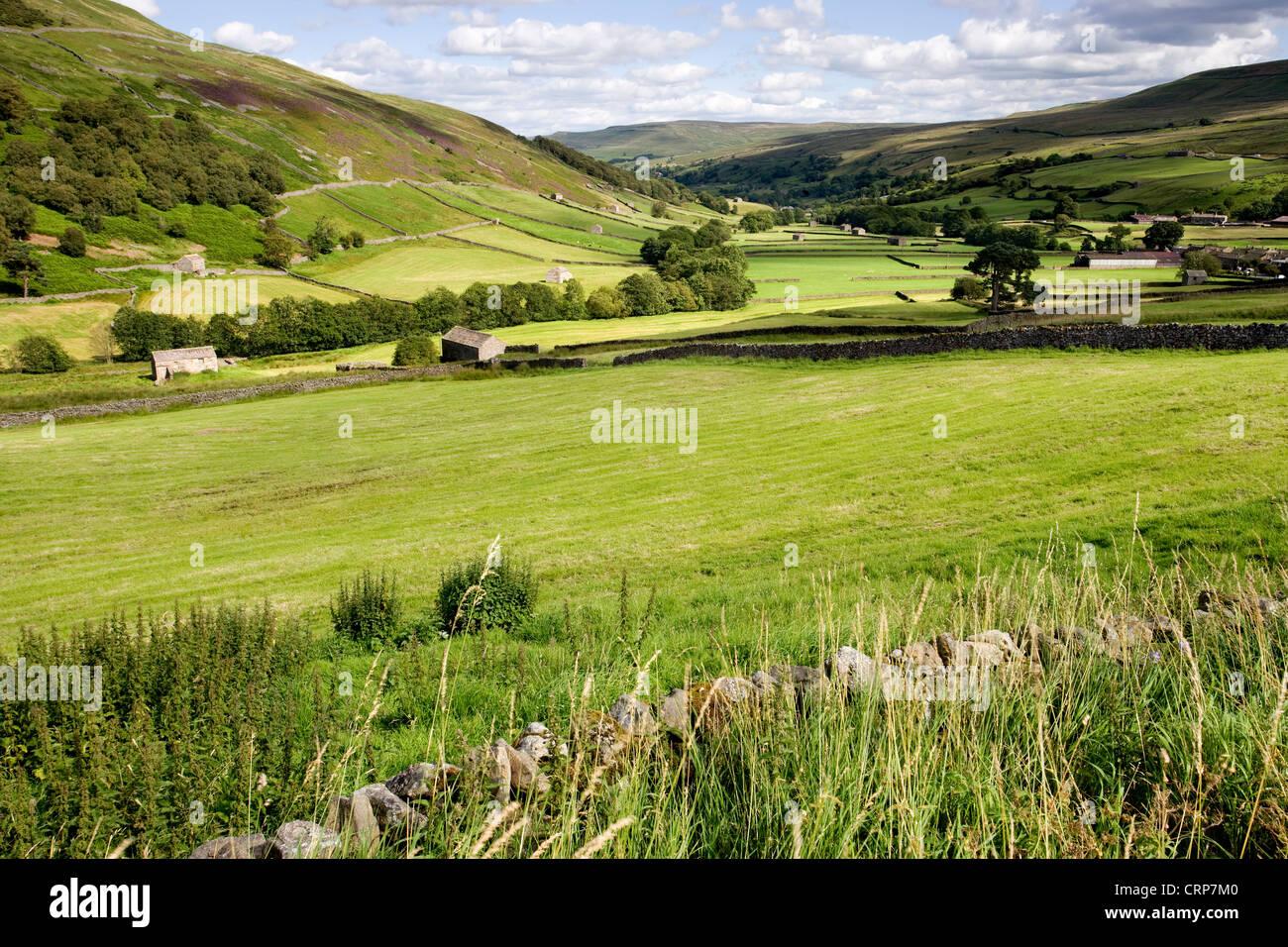 Field barns near Kisdon hill, Swaledale, North Yorkshire Dales, England - Stock Image