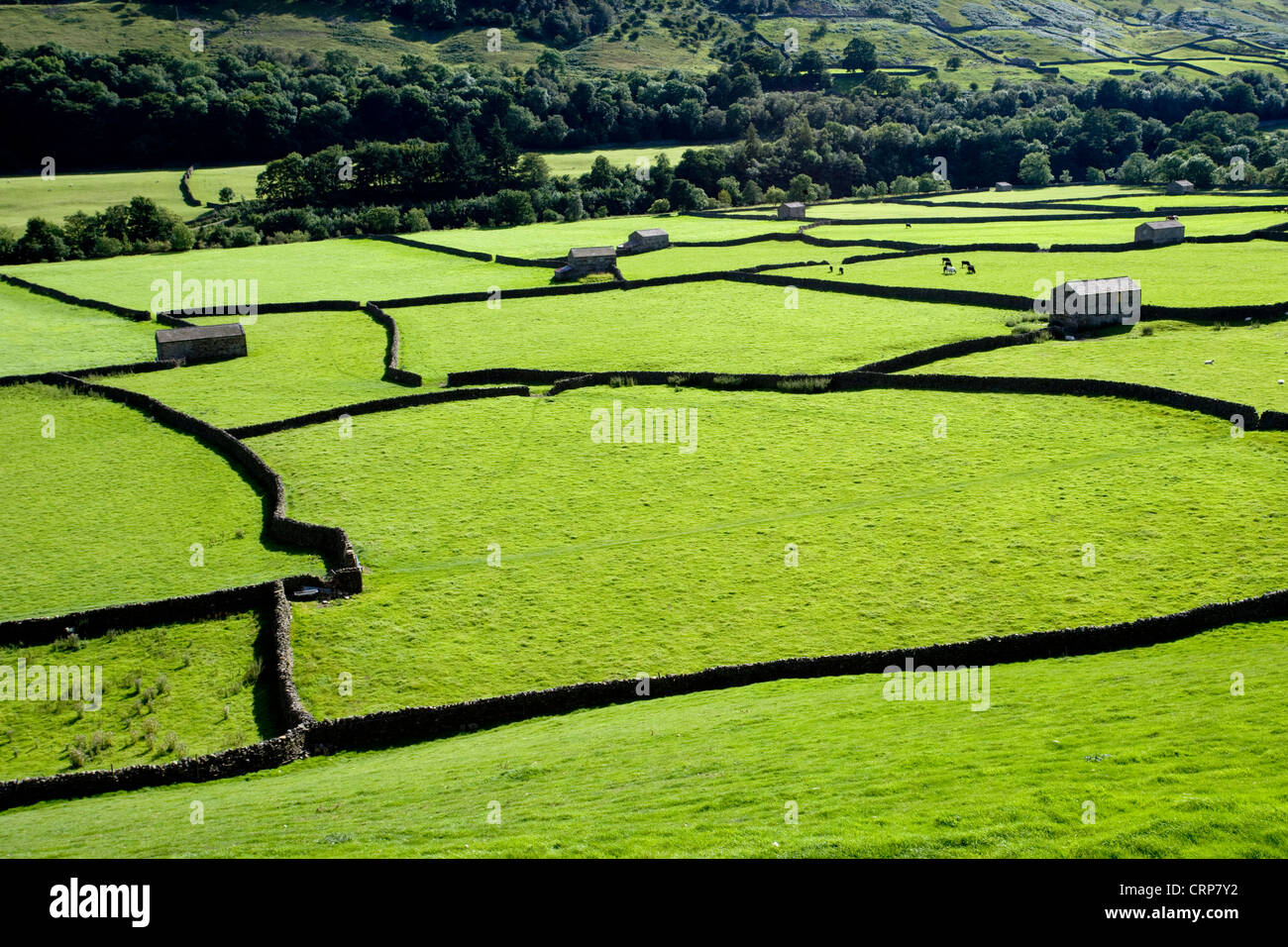 Field Barns near Gunnerside, Swaledale, North Yorkshire Dales, England - Stock Image