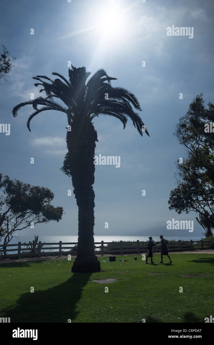 silhouette shot showing 2 persons exercising (boxercise) on grass under a palm tree - Stock Image