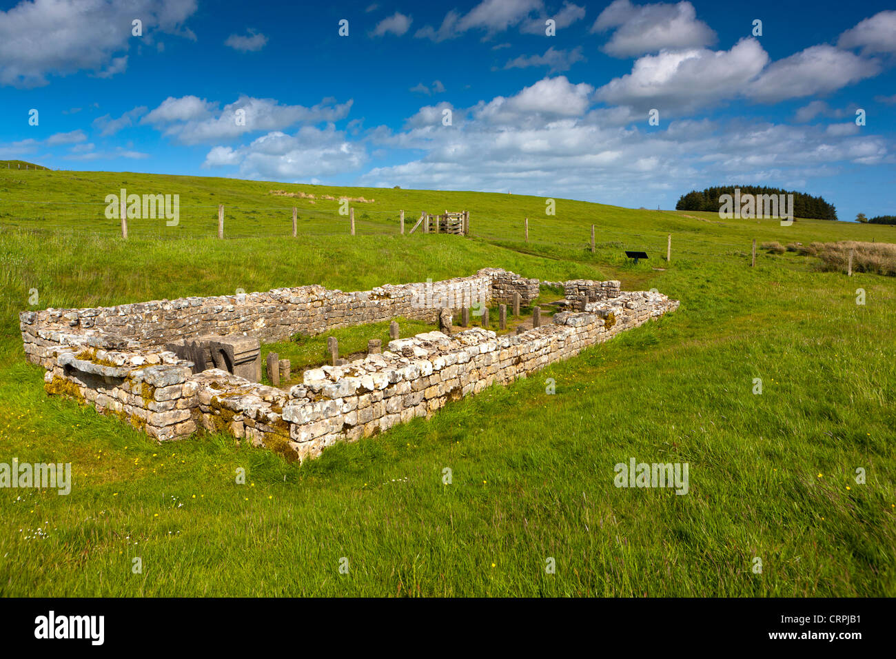 The Temple of Mithras (the Mithraeum) near Carrawburgh fort along Hadrian's Wall. - Stock Image