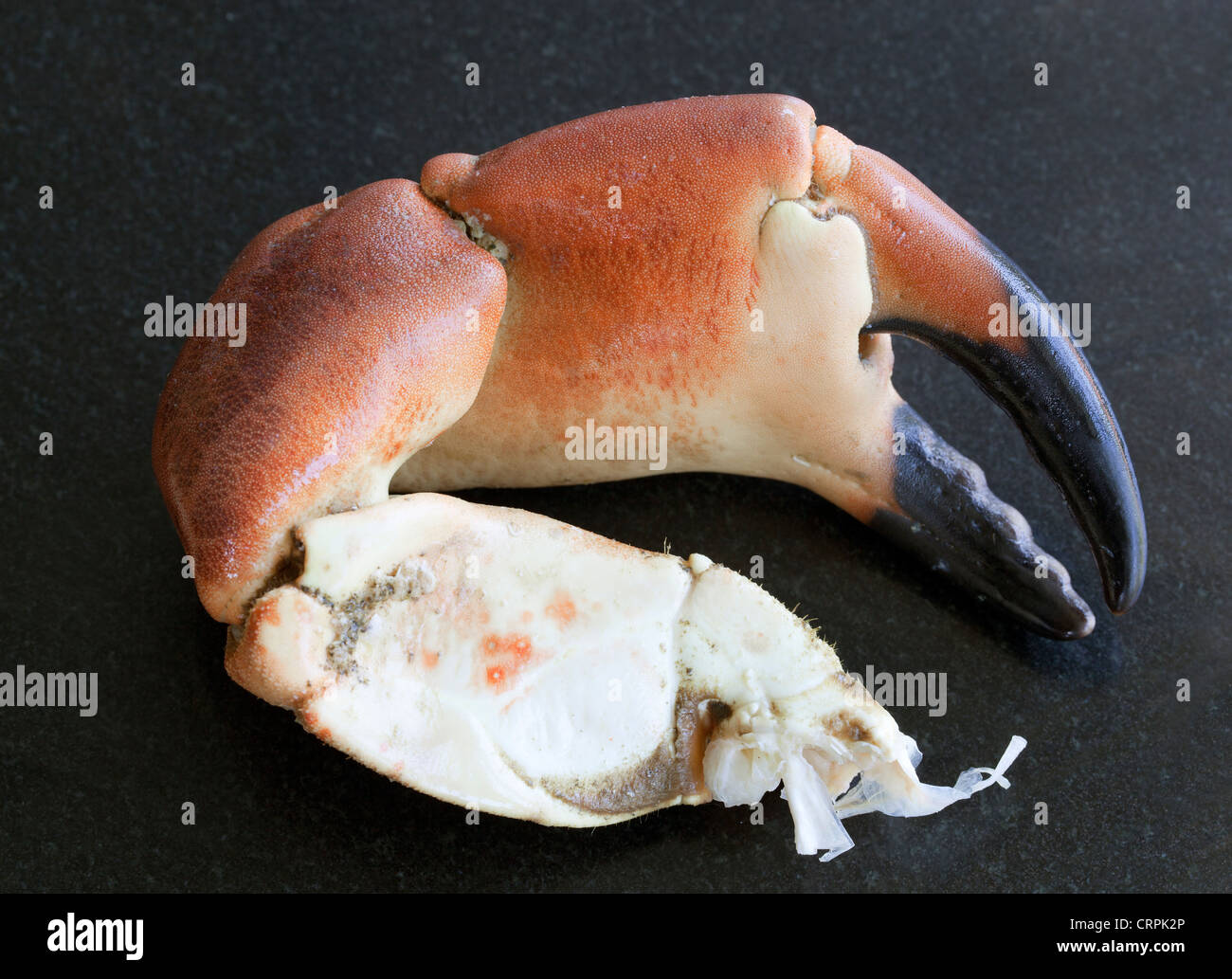 Crab Claw - Stock Image