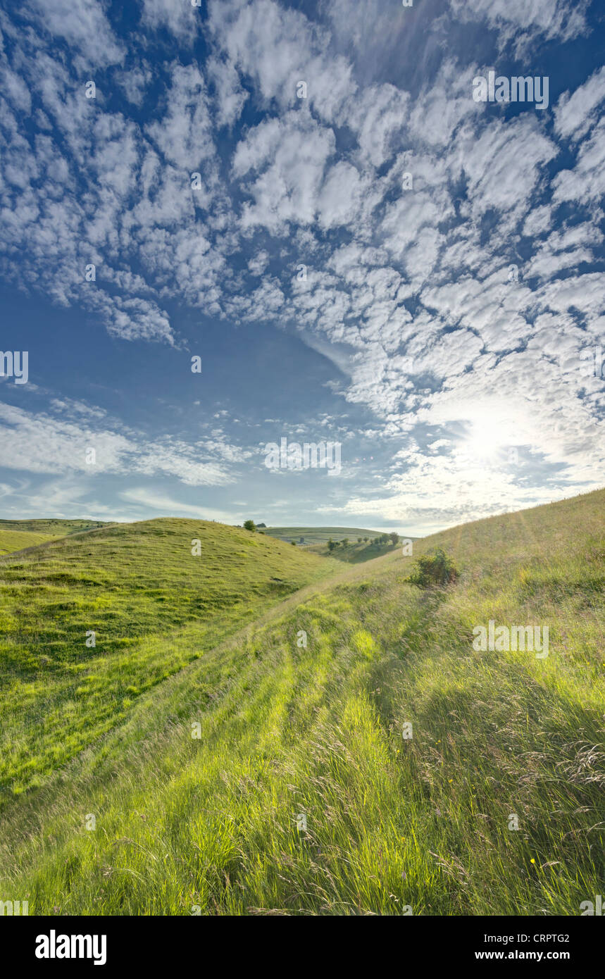 Chalk downland at Calstone Coombes, Wiltshire - Stock Image