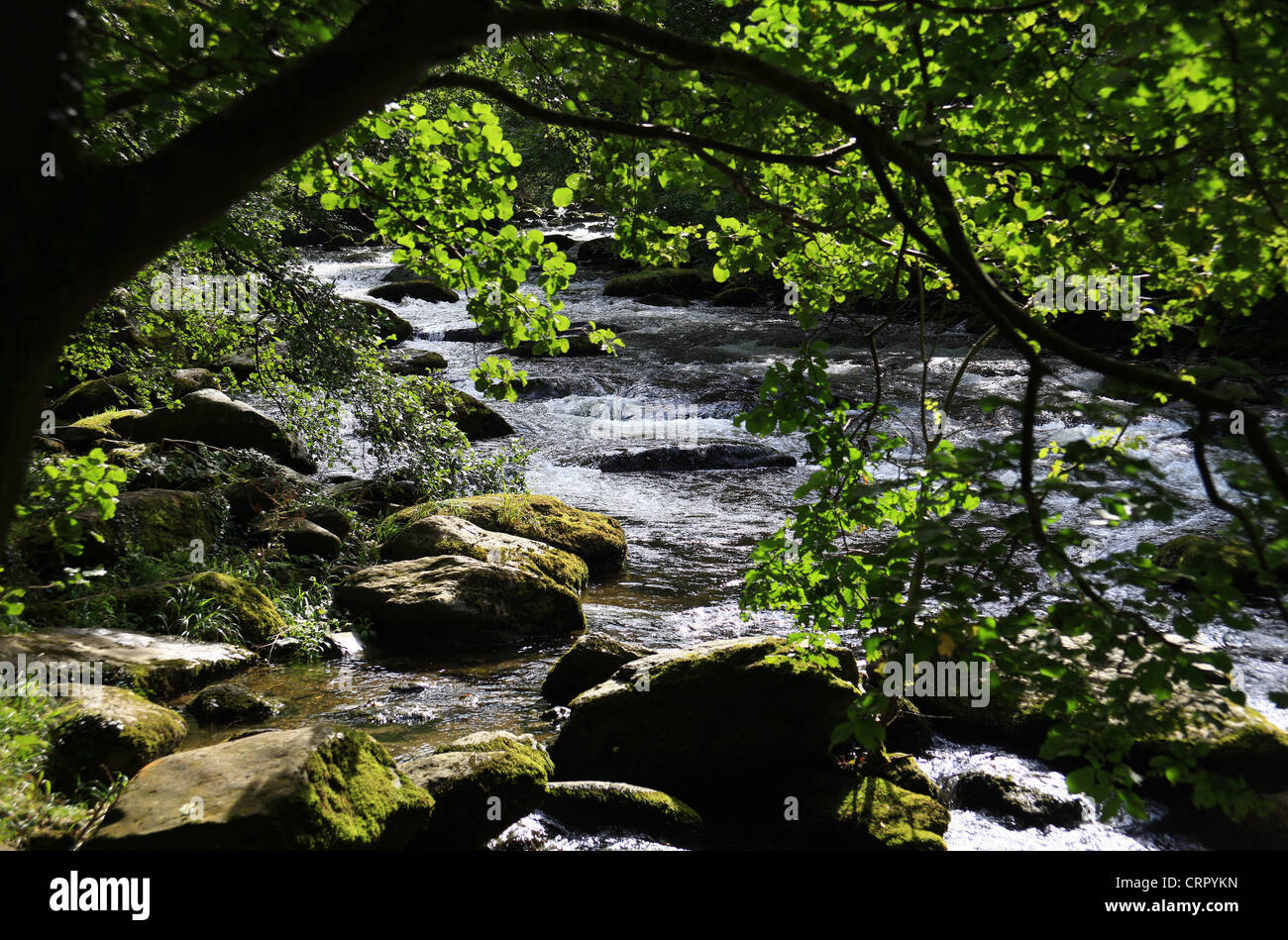 In the gorge of the East Lyn River at Lynmouth  North Devon England - Stock Image