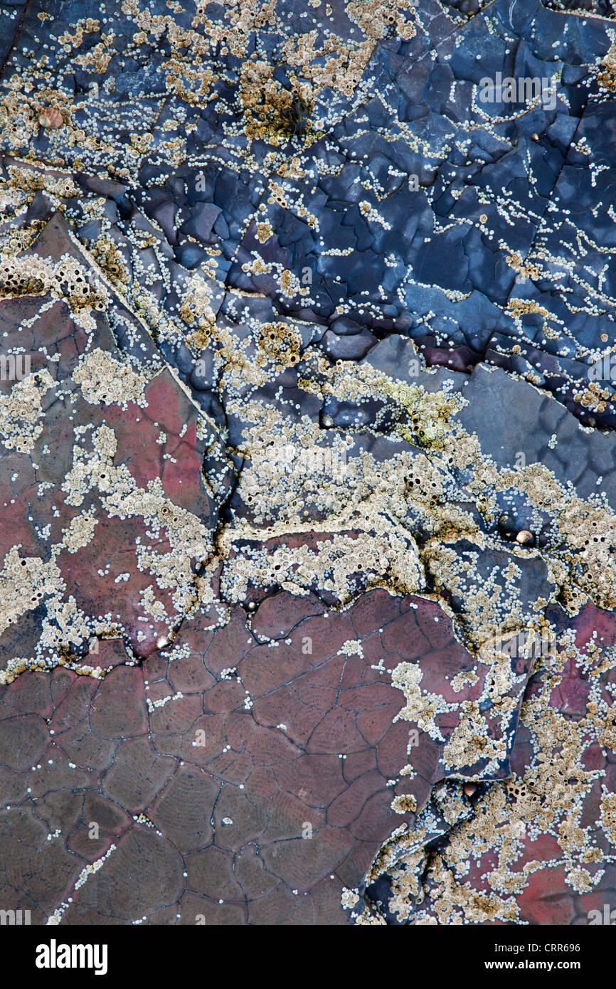 Low Tide Rock Detail on the Beach at Saltwick Bay near Whitby North Yorkshire England - Stock Image