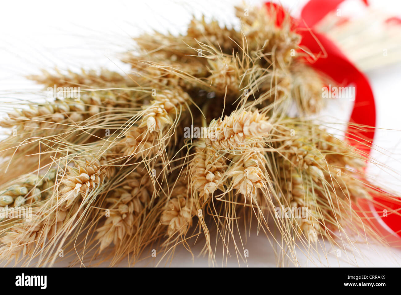 Bouquet of ripe ears of wheat with red ribbon - Stock Image