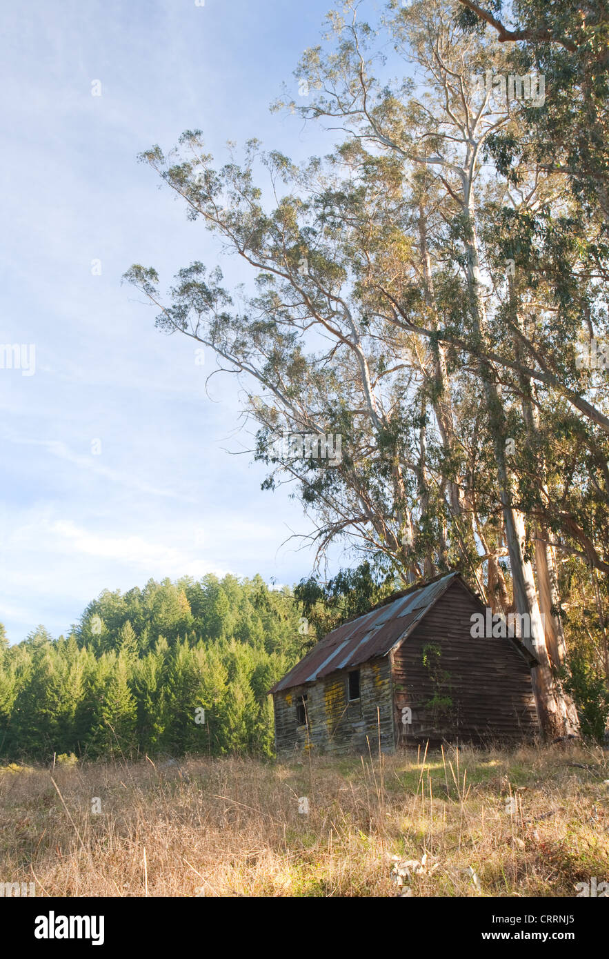 Old Abandoned Cabin in Sunny Field - Stock Image