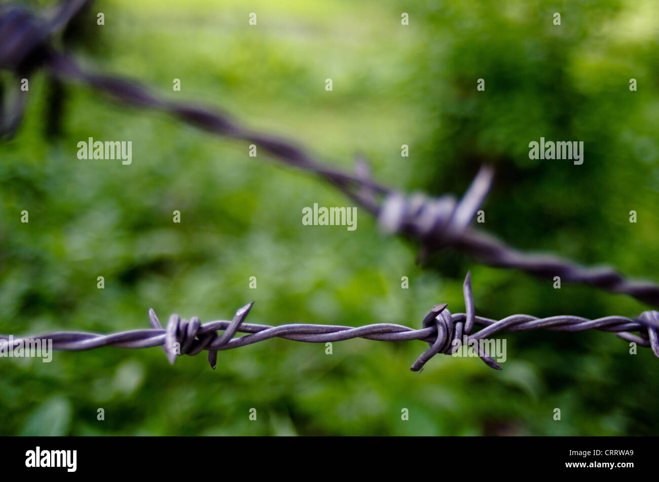 Barbed wire fence against out of focus green outdoor background. - Stock Image