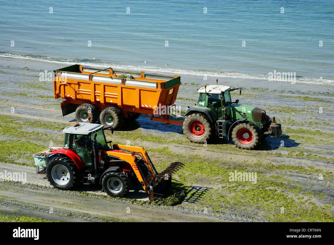 green algae and fertilizers - Stock Image