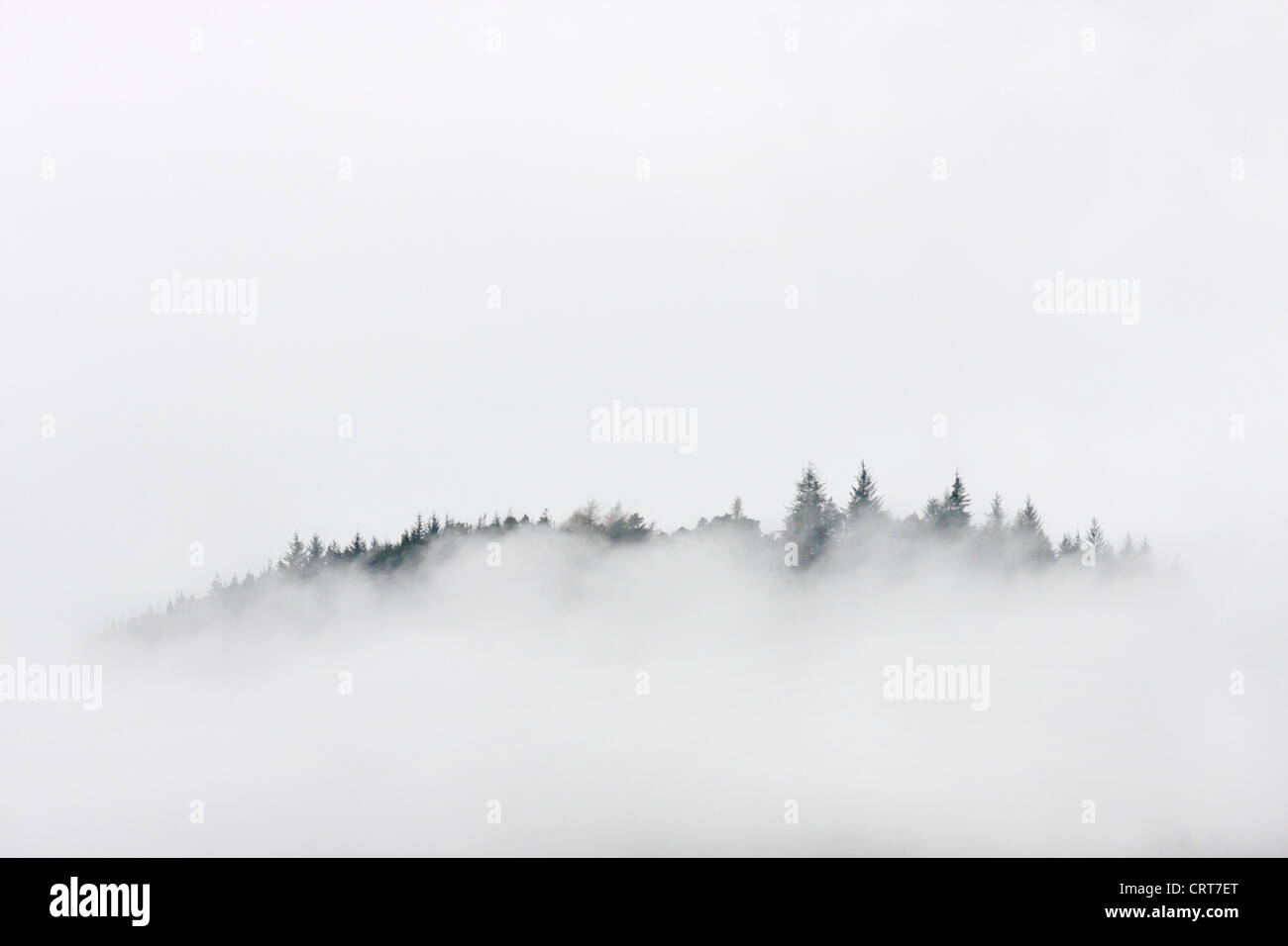 Pine trees amongst the clouds, Strathconon, Highlands, Scotland, UK - Stock Image