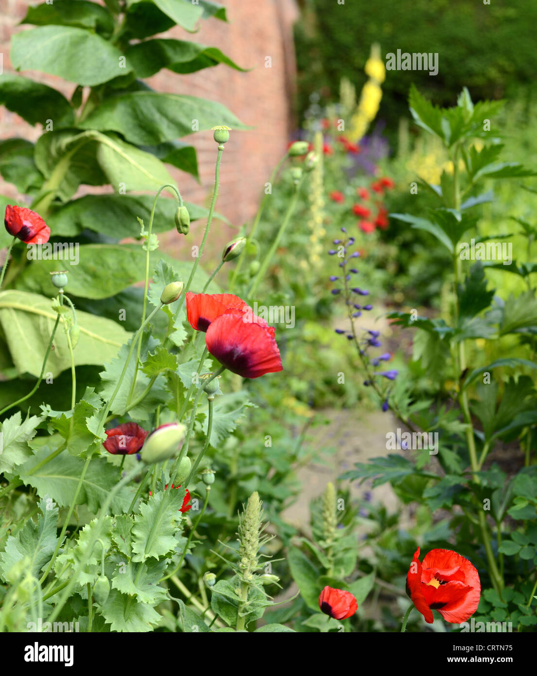 Stone walled country garden - Stock Image