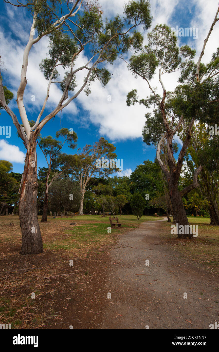 A path running through Eucalyptus trees in the Australian country side. - Stock Image