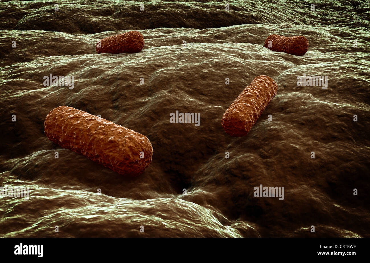Microbes attacking a tissue - Stock Image