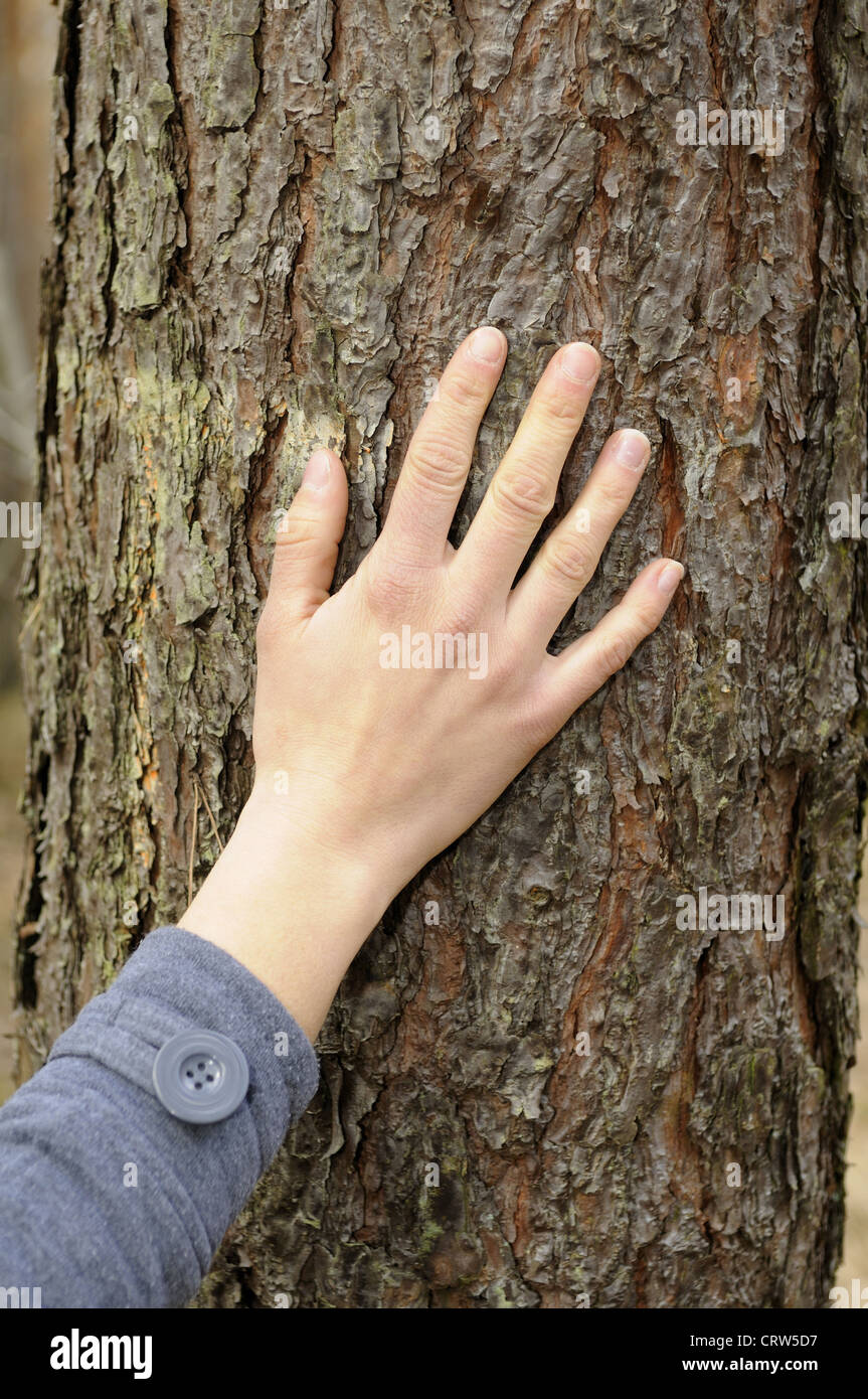 hand touches a tree Stock Photo