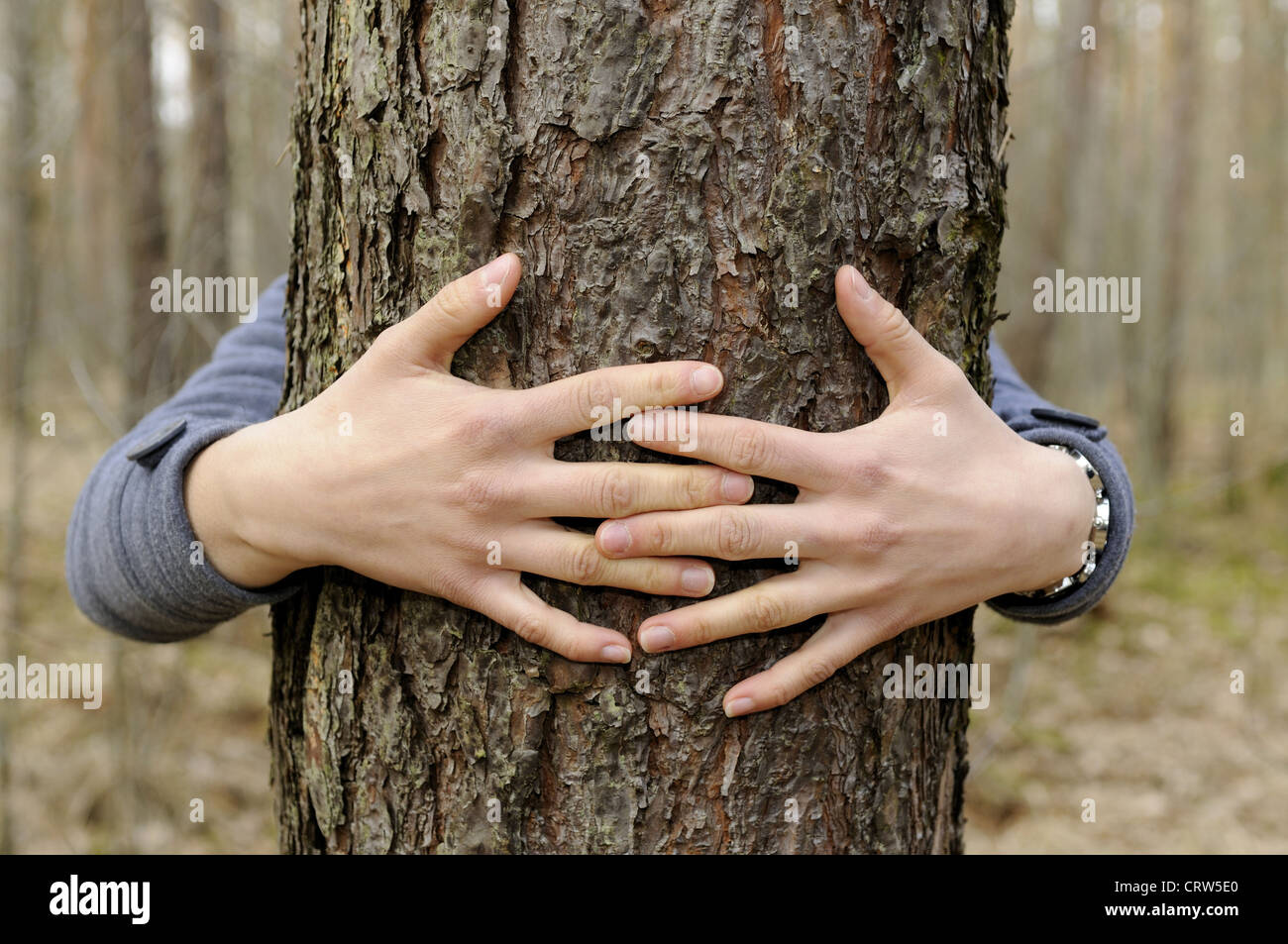 hands hug a tree Stock Photo