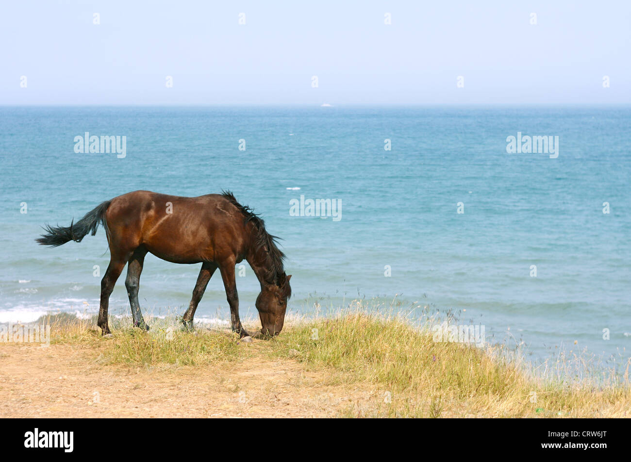 Horse on the beach Stock Photo