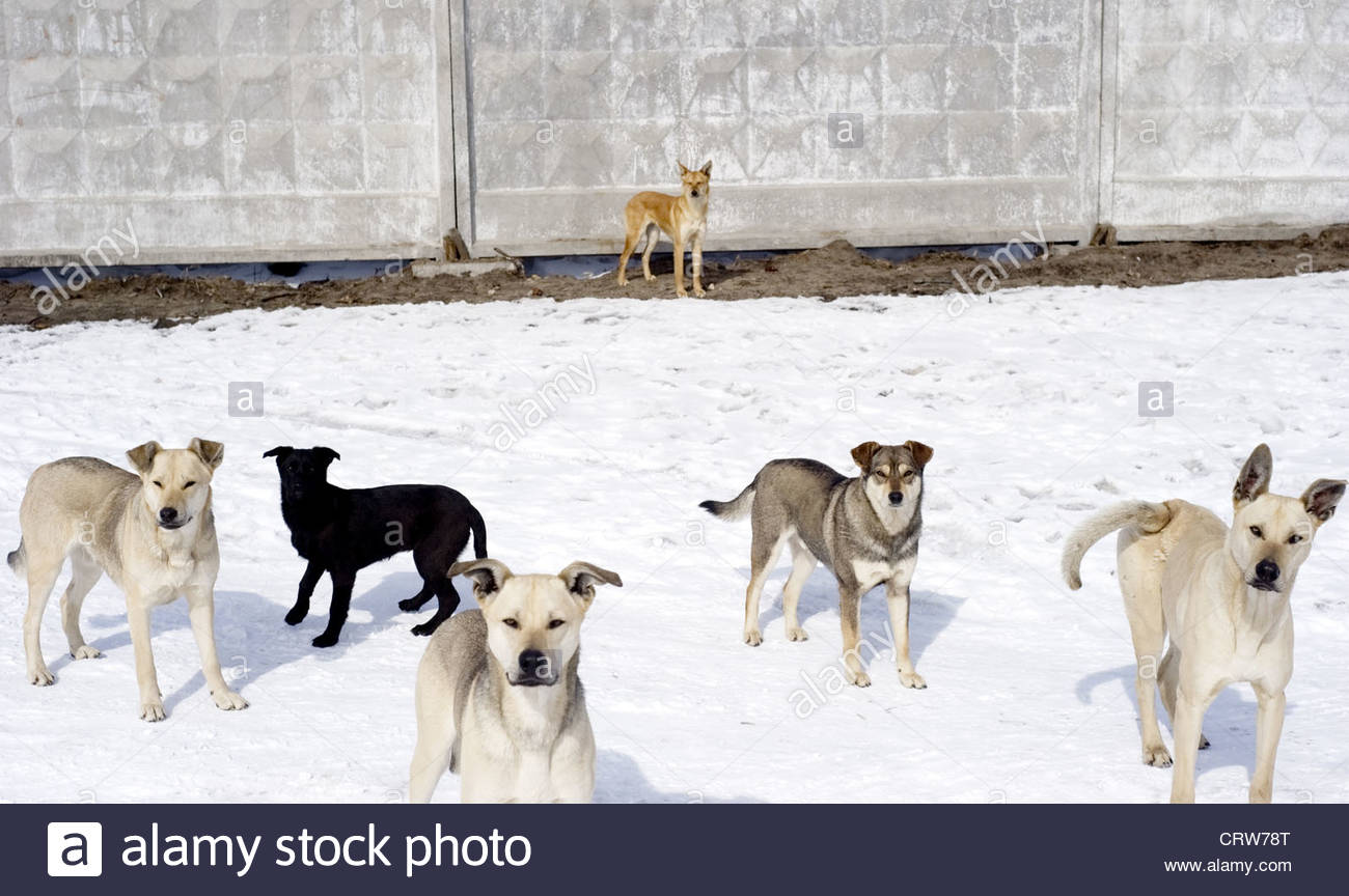 Homelessness dogs - Stock Image