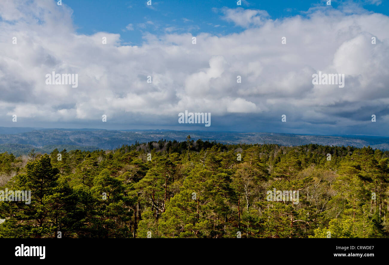 view over forest with cloudy sky - norway - Stock Image