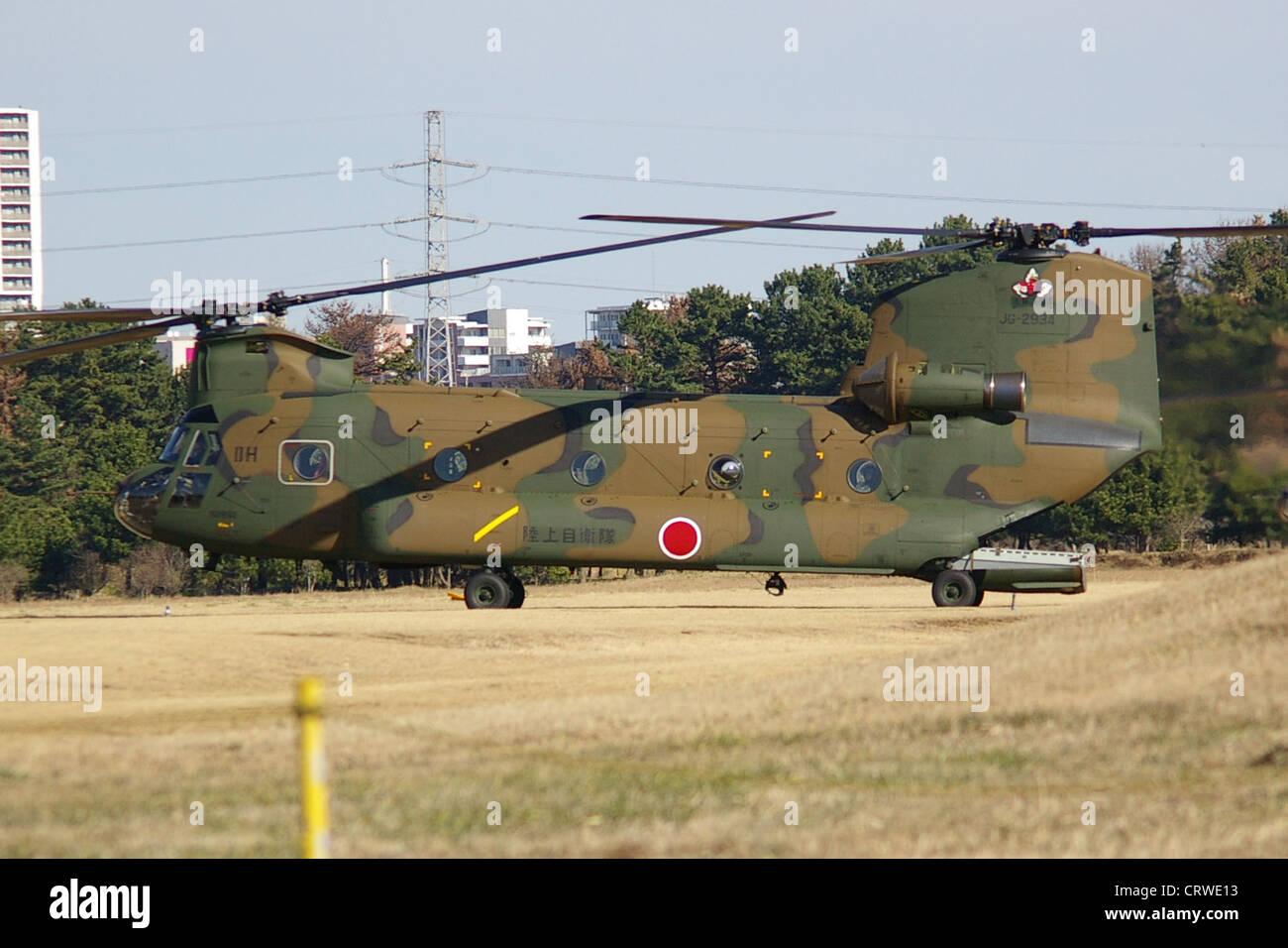 JGSDF CH-47J,1st Helicopter Brigade.In Narashino, Japan, - Stock Image