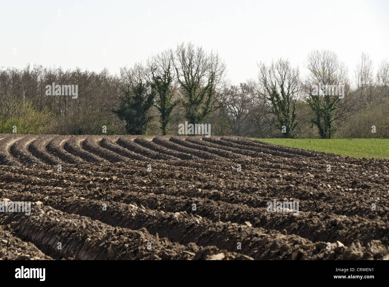 Field in the Spring Stock Photo