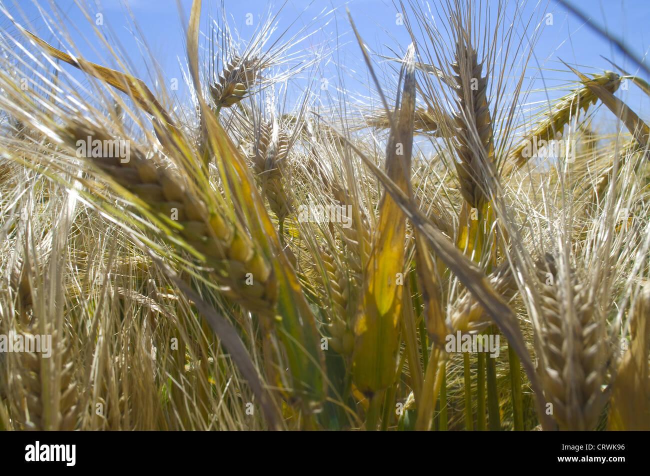 fields - Stock Image