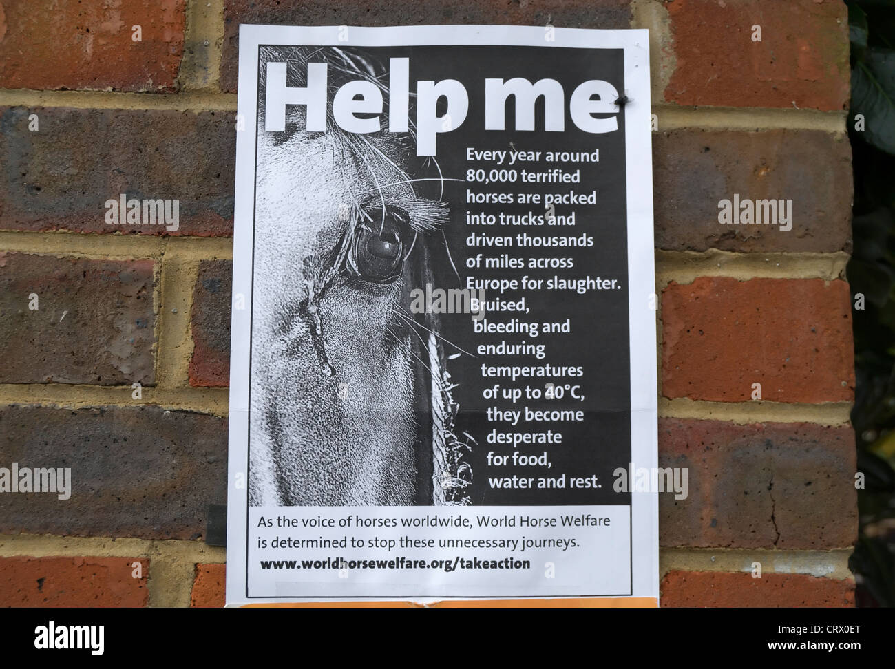 help me poster from world horse welfare describing the treatment of horses when transported in europe - Stock Image
